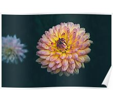 Very Colorful Flower Poster