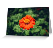 Single Red Flower Greeting Card