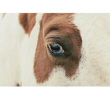 Lucky's Eye Photographic Print