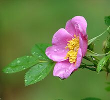 Spring Storm Beauty by Lee Hiller