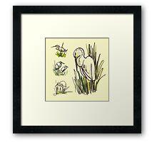 Great Egrets Framed Print