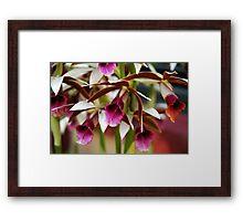 Terrestrial orchids Framed Print