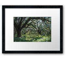 Majestic oaks Framed Print