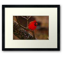 Portrait of a Redbird Framed Print