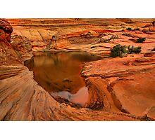 Northern Arizona Desert Oasis Photographic Print