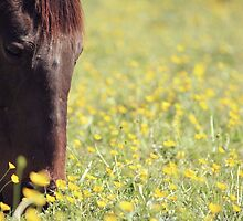 Buttercups by thelimeequine
