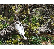 Skull And Oak Photographic Print