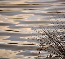 River's Edge by Tiffany Dryburgh