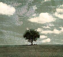Tuscany tree by Vicki Moritz