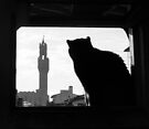 Silhouette, Florence by Tiffany Dryburgh