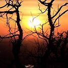 Sunset to Start My Journey by Brenda Dahl