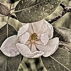 White Magnolia by Lois  Bryan