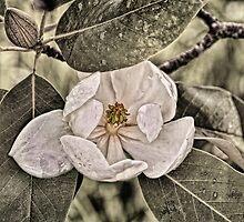 White Magnolia by Lois  Bryan
