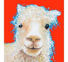 Alpaca painting on red background Photographic Print