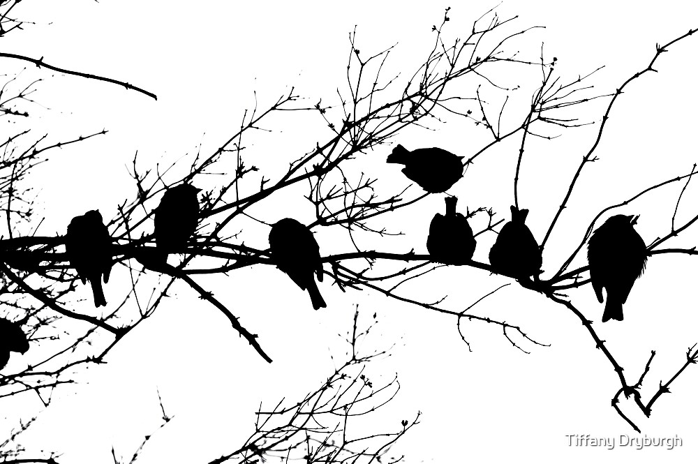 Sparrow Line Up by Tiffany Dryburgh