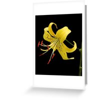 Shades of Lily Greeting Card