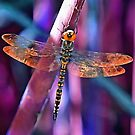Dragonfly In Orange and Blue by taiche