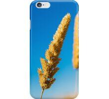 Golden grass on the Golden Plains iPhone Case/Skin