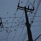 Birds Serenade by michel bazinet