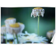 Finite Flower Poster