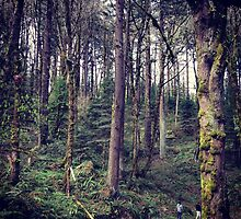 Portland Forest by omhafez