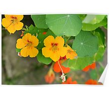 flower product image Poster