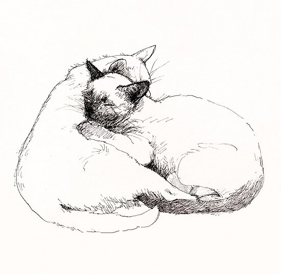 Chinky and Chang : ink drawing by Roz McQuillan