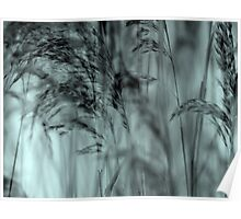 Whispering Reeds  - JUSTART © Poster