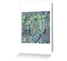 Tropical Nerve Mosaic Plant Fittonia Leaves Greeting Card