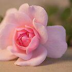 Pastel Pink by Vickie Burt