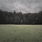 square no. 0057 (Waldrand II) by doubleblind