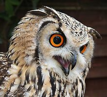 Eurasian Eagle Owl by AnnDixon