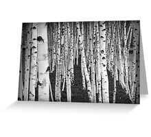 Silver Birch Trees Greeting Card