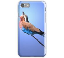Lilac-breasted Roller - Blue Bird Background from Africa iPhone Case/Skin