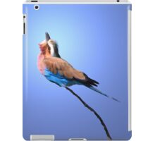 Lilac-breasted Roller - Blue Bird Background from Africa iPad Case/Skin