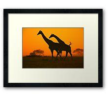 Giraffe Golden Run - African Wildlife Background Framed Print
