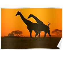 Giraffe Golden Run - African Wildlife Background Poster