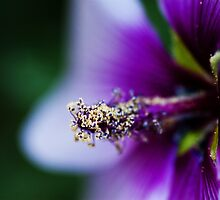 The Splendour of Spring by BaliBuddha