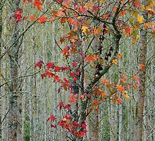 Autumn Fire by Harry Oldmeadow