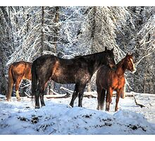 """Winter Horses """"Year of the Horse"""" Equine photo by NaturePrints"""