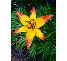 The Brightest Flower Photographic Print
