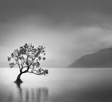Wanaka, New Zealand by Neville Jones