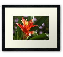 Tangerine Marvel Framed Print