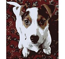 Poster Puppy 1 Photographic Print