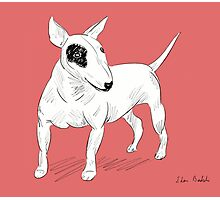 Cool Bull Terrier Doodle Photographic Print