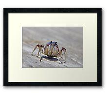 Super crab 01 Framed Print