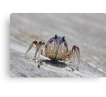 Super crab 01 Canvas Print