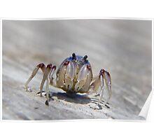 Super crab 01 Poster