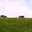 ANTIQUE TRACTORS ON A HILL by Pauline Evans