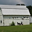 Decorated Barn by Pauline Evans